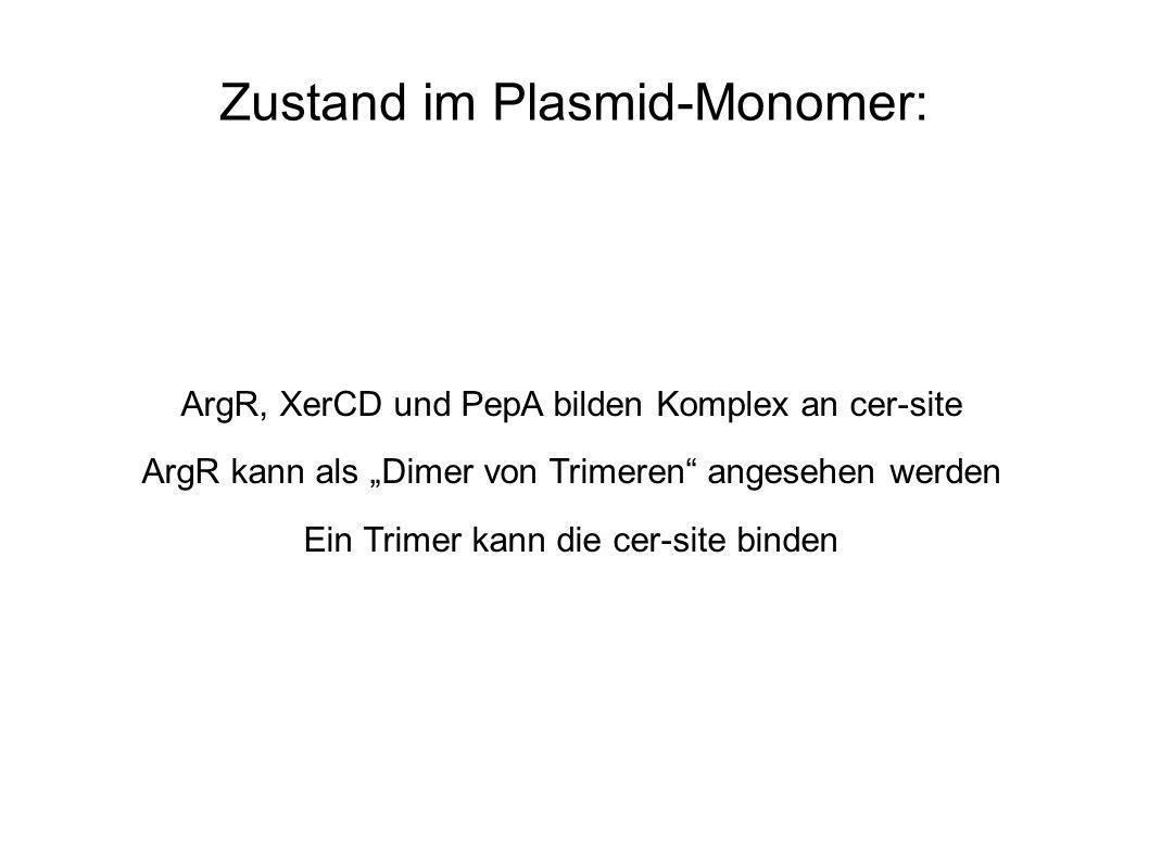 Zustand im Plasmid-Monomer: