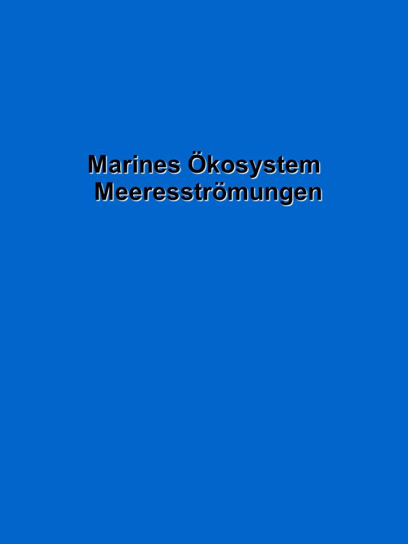 Marines Ökosystem Meeresströmungen