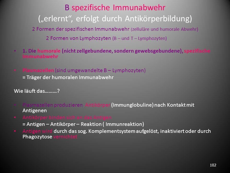 """B spezifische Immunabwehr (""""erlernt , erfolgt durch Antikörperbildung) 2 Formen der spezifischen Immunabwehr (zelluläre und humorale Abwehr) 2 Formen von Lymphozyten (B – und T – Lymphozyten)"""