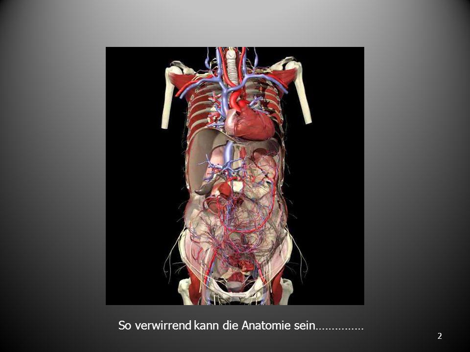 So verwirrend kann die Anatomie sein……………