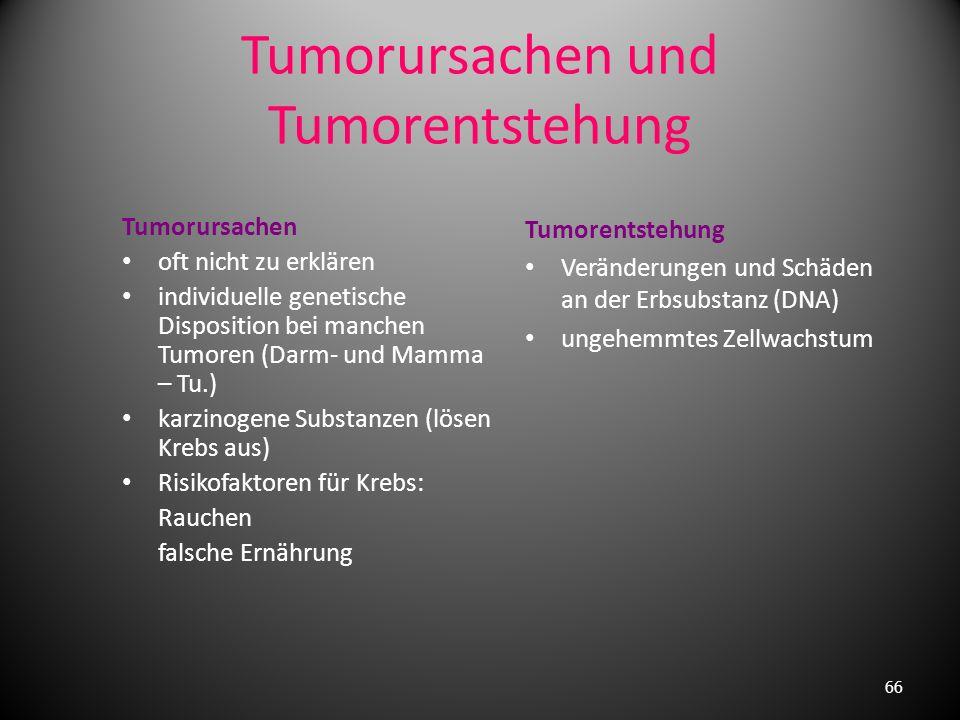 Tumorursachen und Tumorentstehung