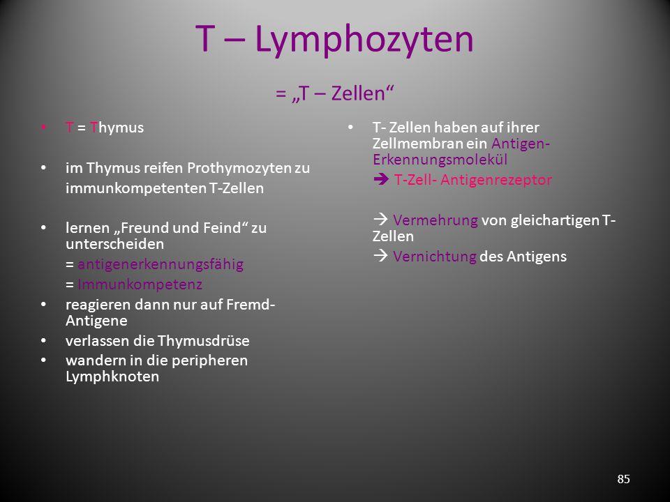 """T – Lymphozyten = """"T – Zellen"""