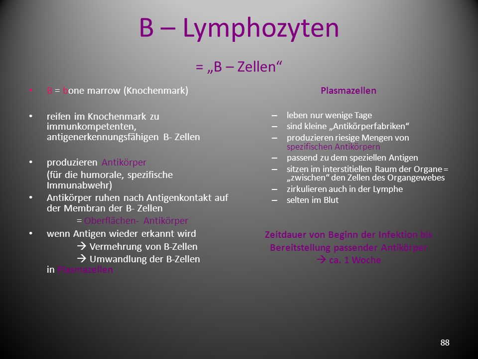 "B – Lymphozyten = ""B – Zellen"