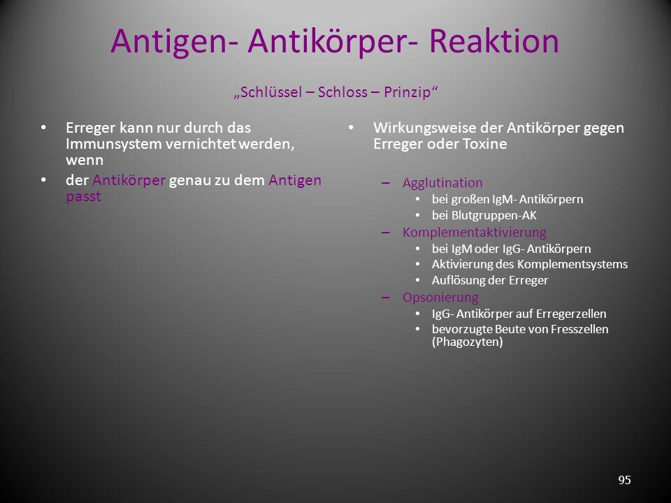 "Antigen- Antikörper- Reaktion ""Schlüssel – Schloss – Prinzip"