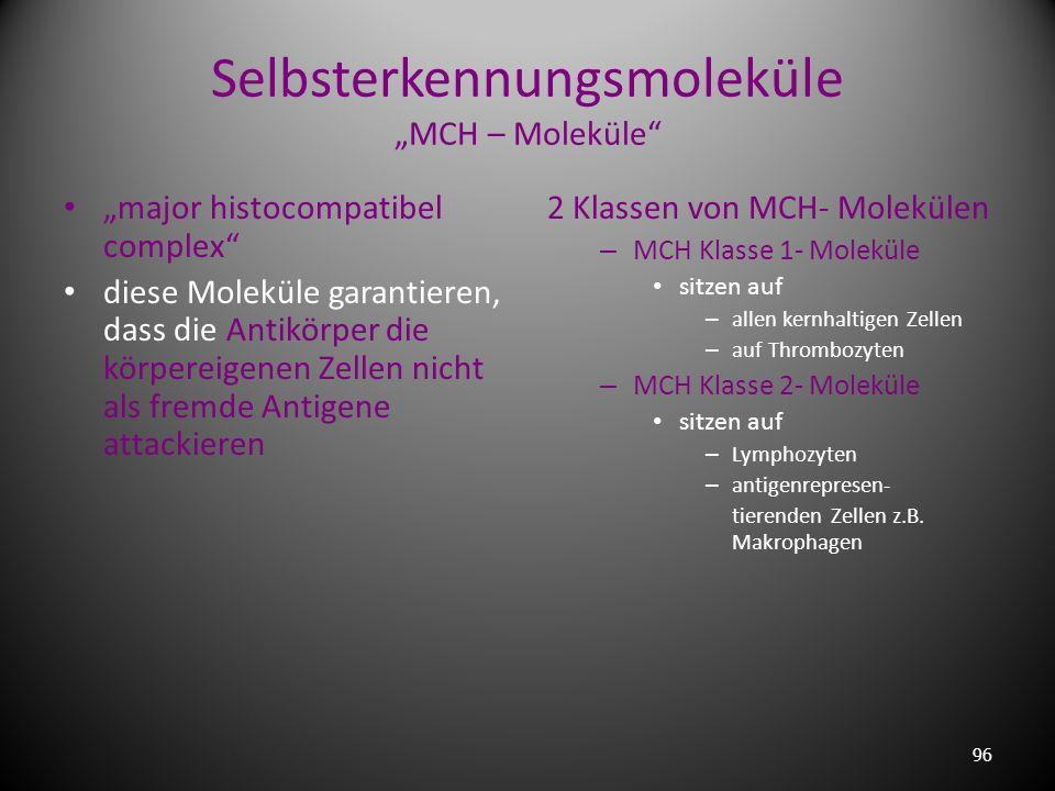 """Selbsterkennungsmoleküle """"MCH – Moleküle"""