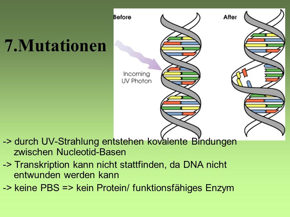 7.Mutationen -> durch UV-Strahlung entstehen kovalente Bindungen zwischen Nucleotid-Basen.