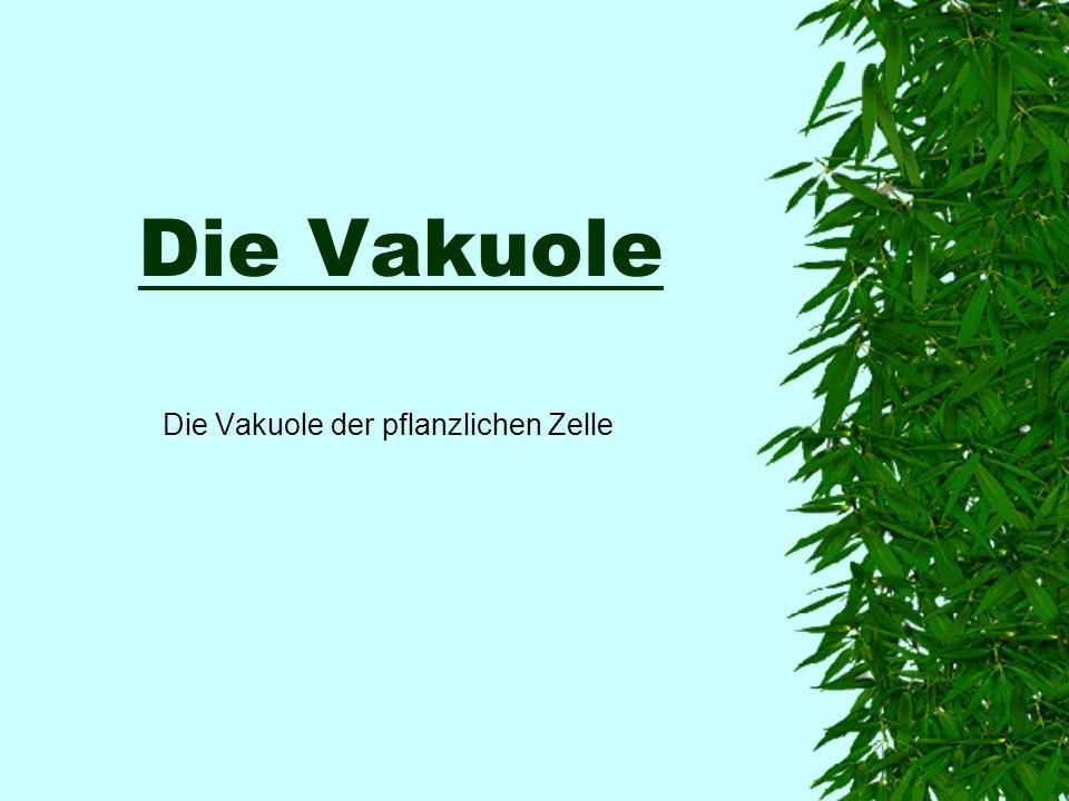 Die Vakuole der pflanzlichen Zelle