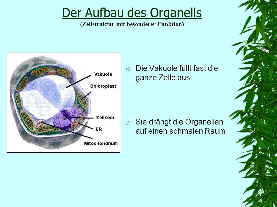 Der Aufbau des Organells