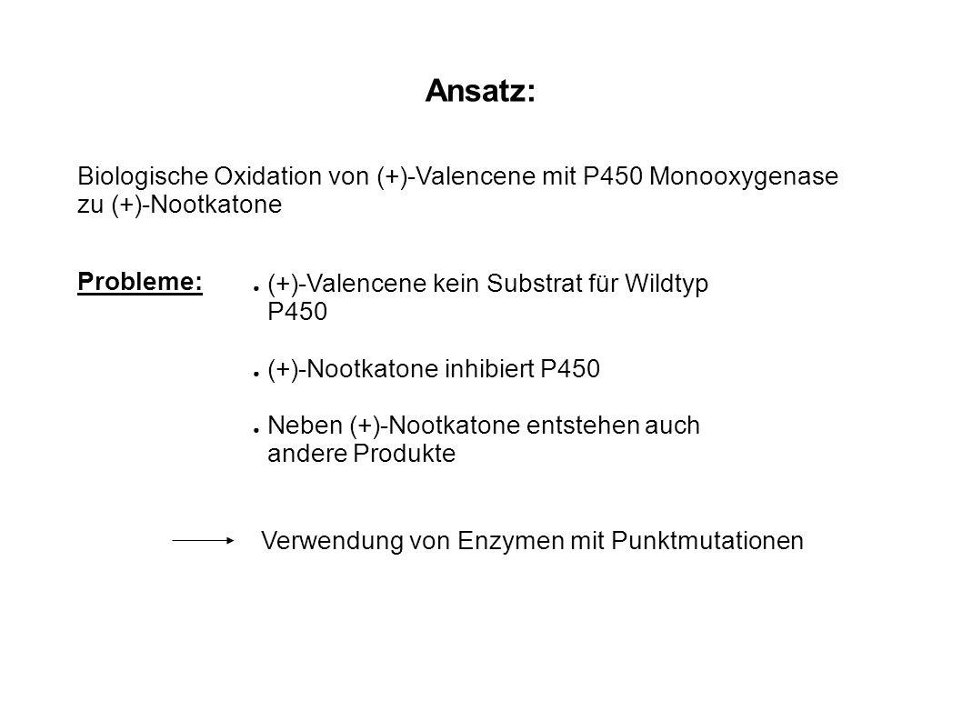 Ansatz: Biologische Oxidation von (+)-Valencene mit P450 Monooxygenase zu (+)-Nootkatone. Probleme: