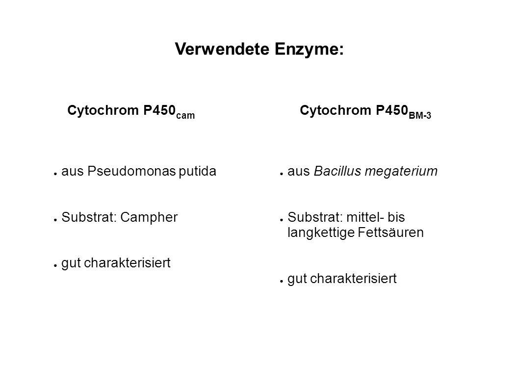Verwendete Enzyme: Cytochrom P450cam Cytochrom P450BM-3