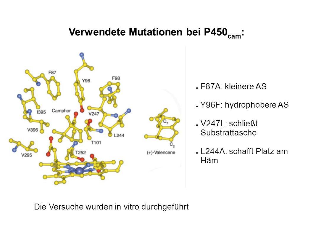 Verwendete Mutationen bei P450cam: