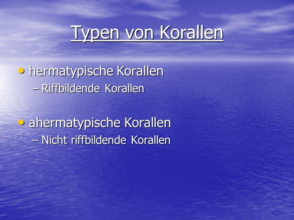 Typen von Korallen hermatypische Korallen ahermatypische Korallen