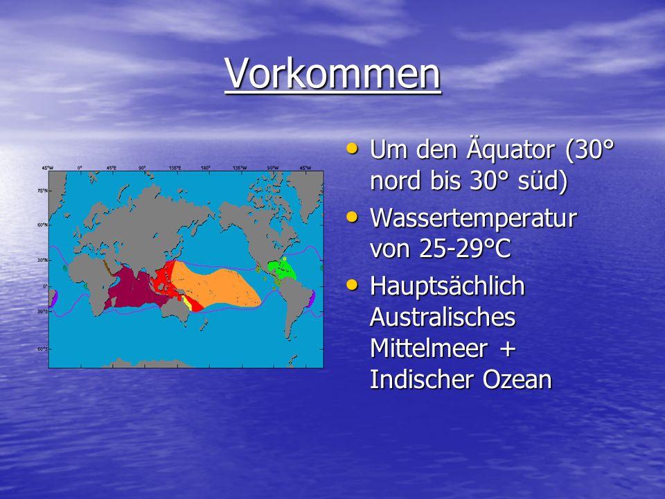 Vorkommen Um den Äquator (30° nord bis 30° süd)