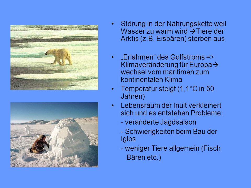 Störung in der Nahrungskette weil Wasser zu warm wird Tiere der Arktis (z.B. Eisbären) sterben aus