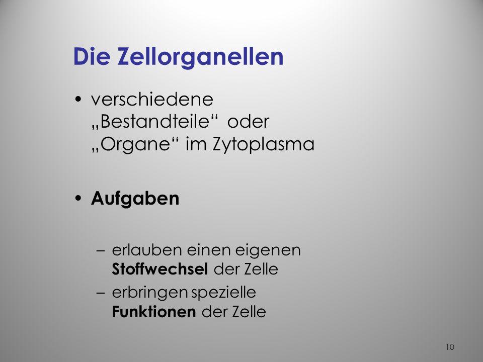 """Die Zellorganellen verschiedene """"Bestandteile oder """"Organe im Zytoplasma. Aufgaben. erlauben einen eigenen Stoffwechsel der Zelle."""