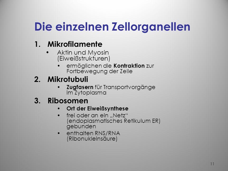 Die einzelnen Zellorganellen
