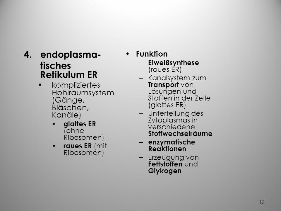 endoplasma- tisches Retikulum ER Funktion