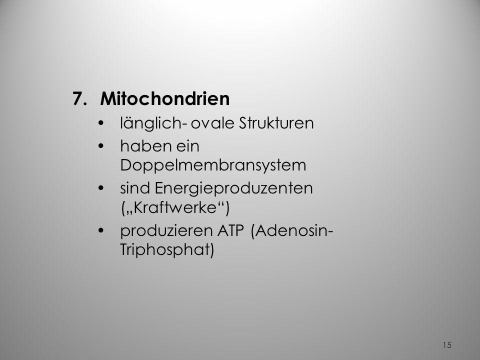 Mitochondrien länglich- ovale Strukturen haben ein Doppelmembransystem