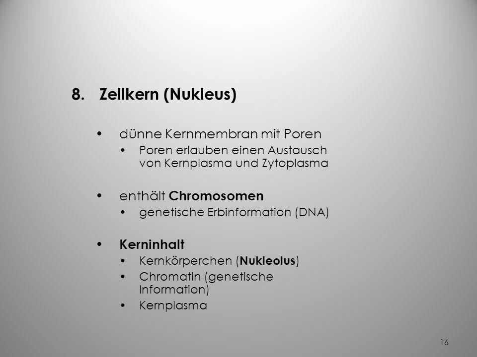 Zellkern (Nukleus) dünne Kernmembran mit Poren enthält Chromosomen