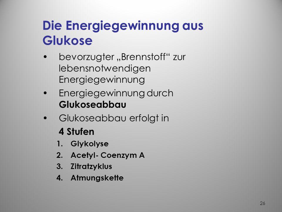 Die Energiegewinnung aus Glukose