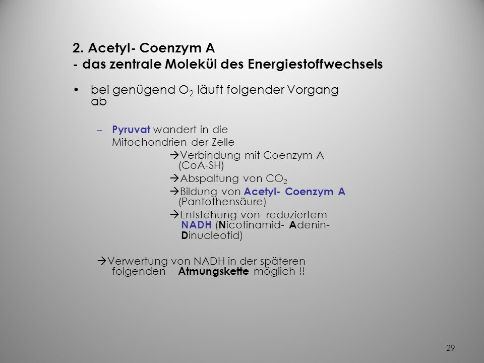2. Acetyl- Coenzym A - das zentrale Molekül des Energiestoffwechsels