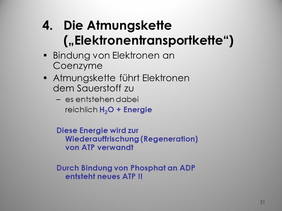 """Die Atmungskette (""""Elektronentransportkette )"""