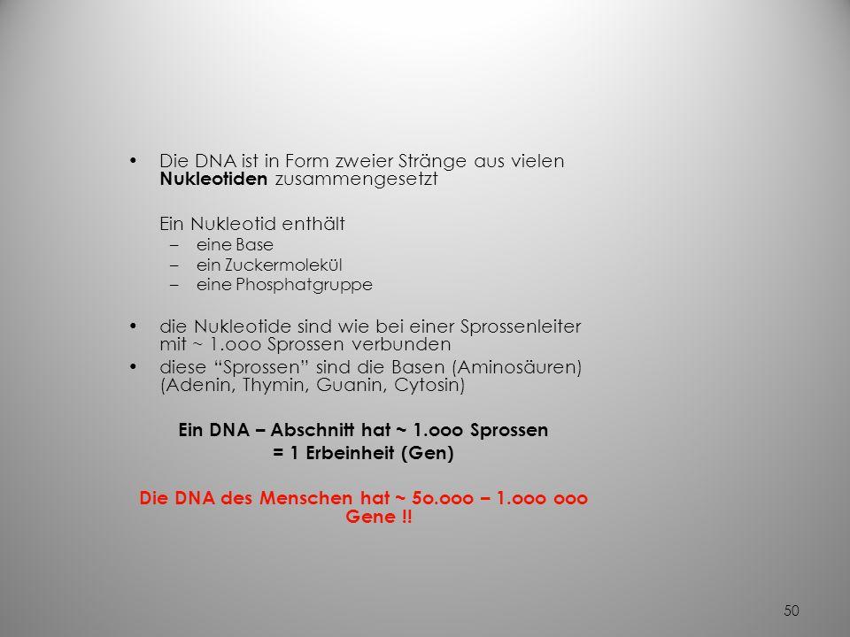 Ein DNA – Abschnitt hat ~ 1.ooo Sprossen = 1 Erbeinheit (Gen)