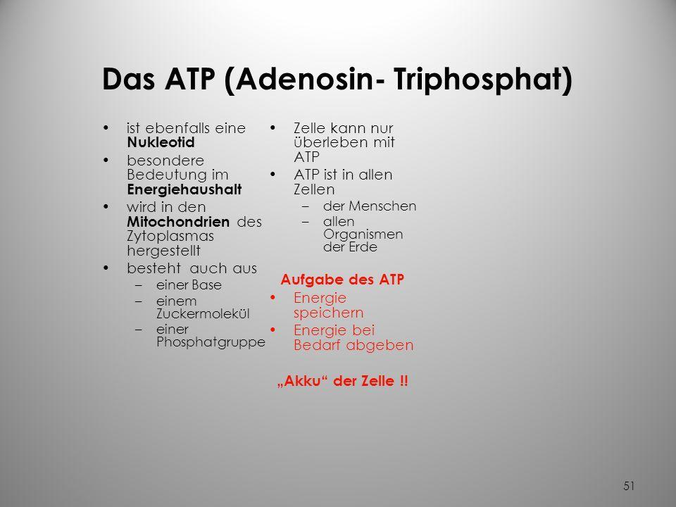 Das ATP (Adenosin- Triphosphat)