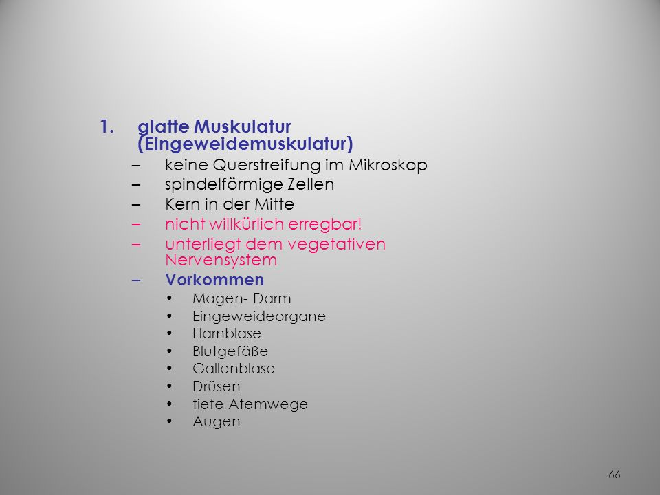 glatte Muskulatur (Eingeweidemuskulatur)
