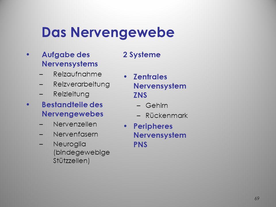 Das Nervengewebe Aufgabe des Nervensystems