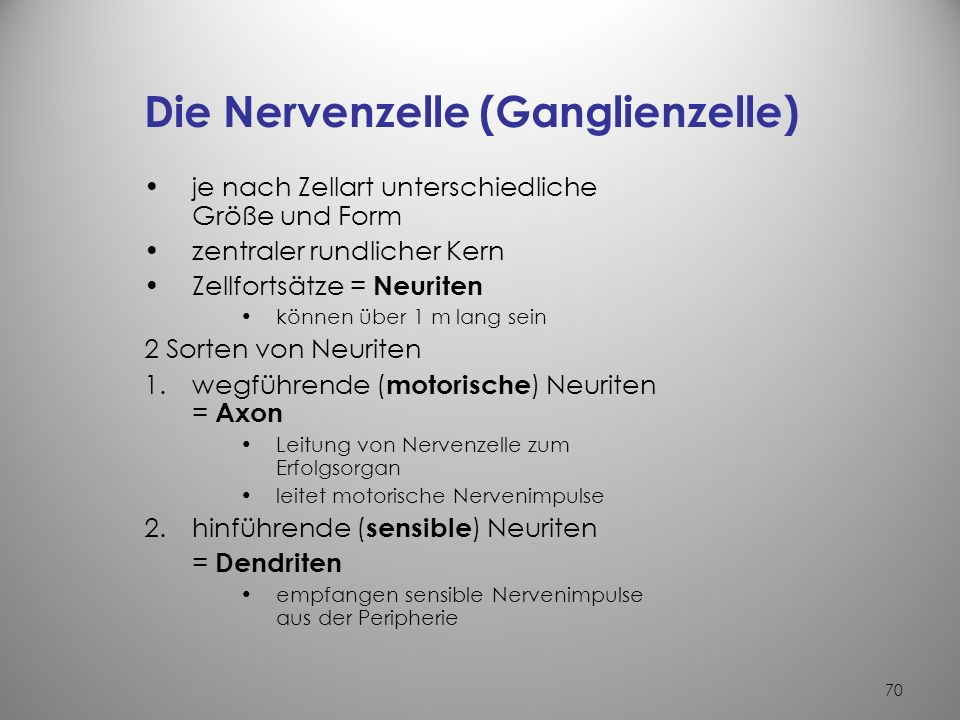 Die Nervenzelle (Ganglienzelle)