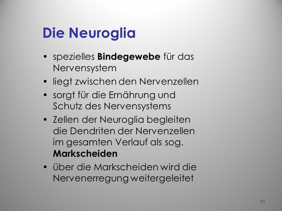 Die Neuroglia spezielles Bindegewebe für das Nervensystem