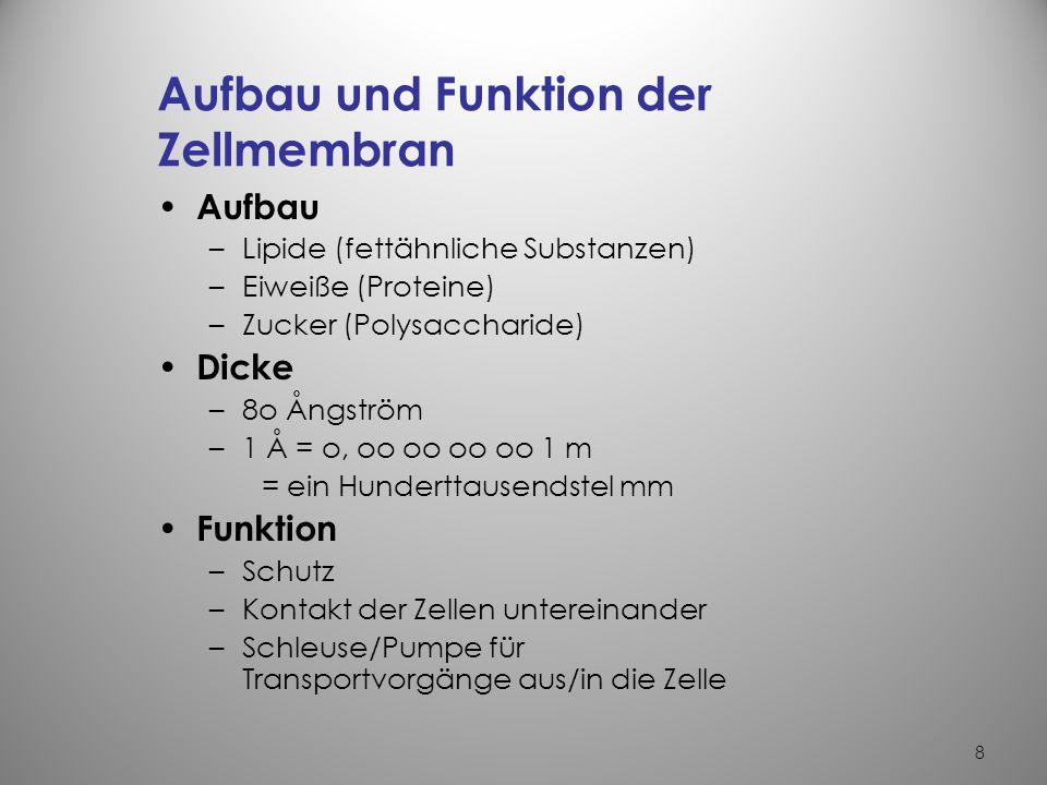 Ziemlich Auge Anatomie Und Funktion Ideen - Menschliche Anatomie ...