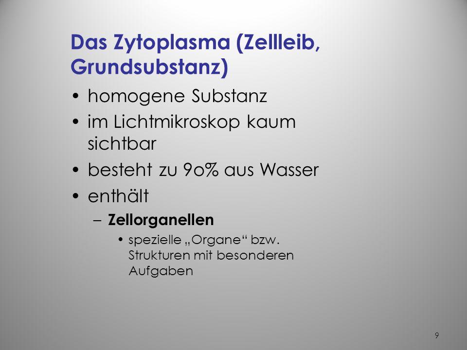 Das Zytoplasma (Zellleib, Grundsubstanz)