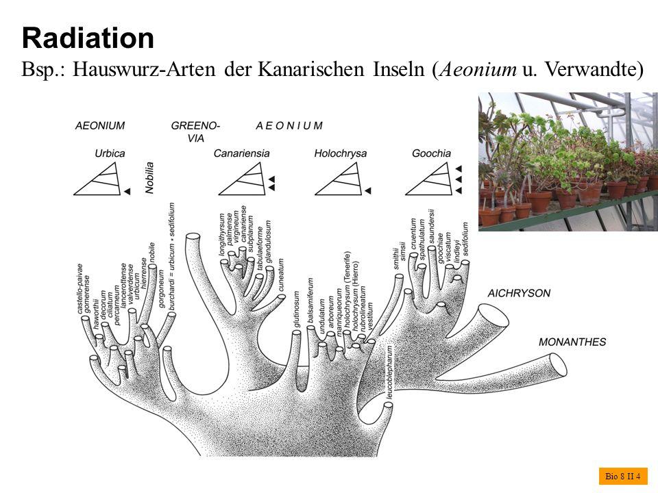Radiation Bsp.: Hauswurz-Arten der Kanarischen Inseln (Aeonium u. Verwandte) Bio 8 II 4