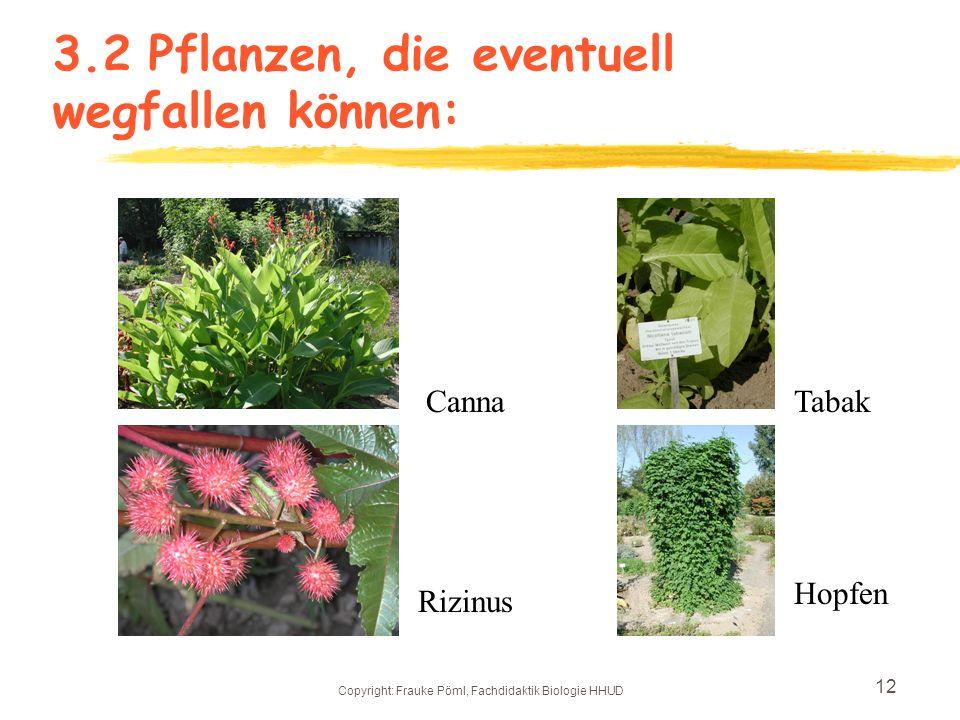 3.2 Pflanzen, die eventuell wegfallen können:
