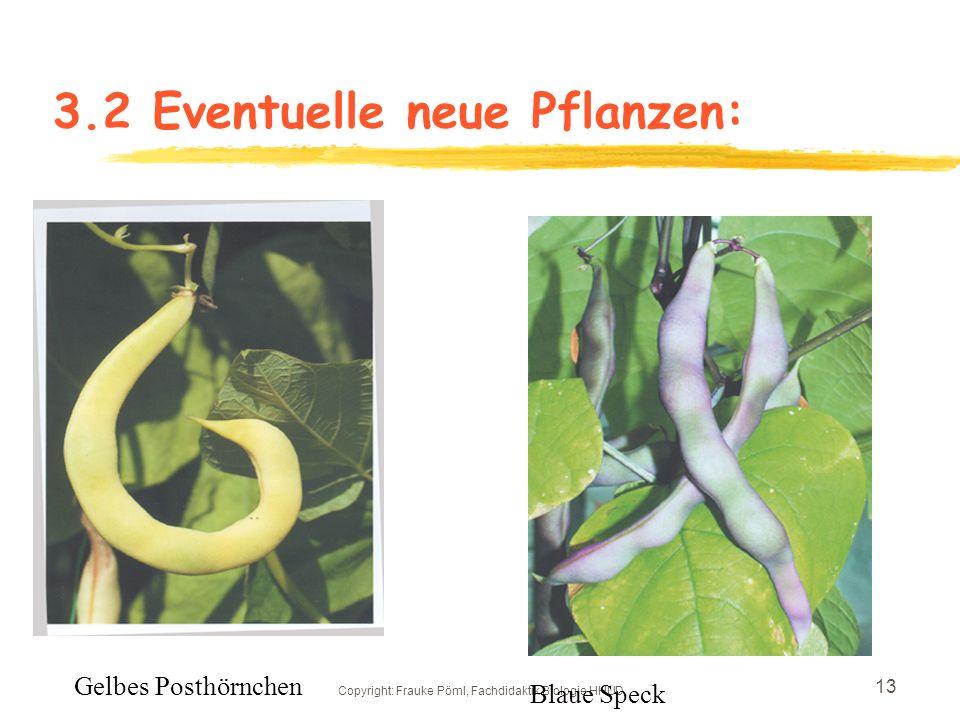3.2 Eventuelle neue Pflanzen: