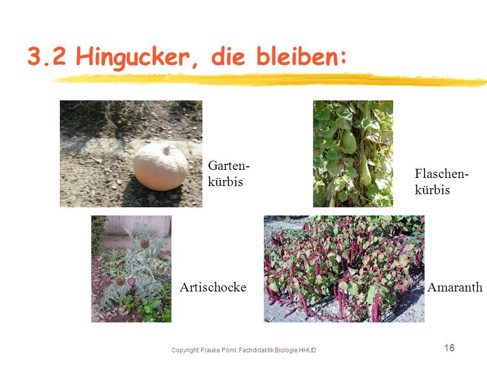 3.2 Hingucker, die bleiben: