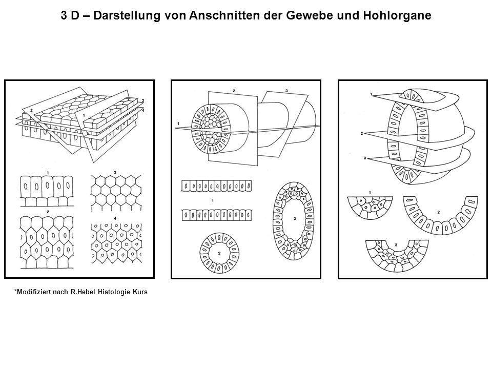 3 D – Darstellung von Anschnitten der Gewebe und Hohlorgane