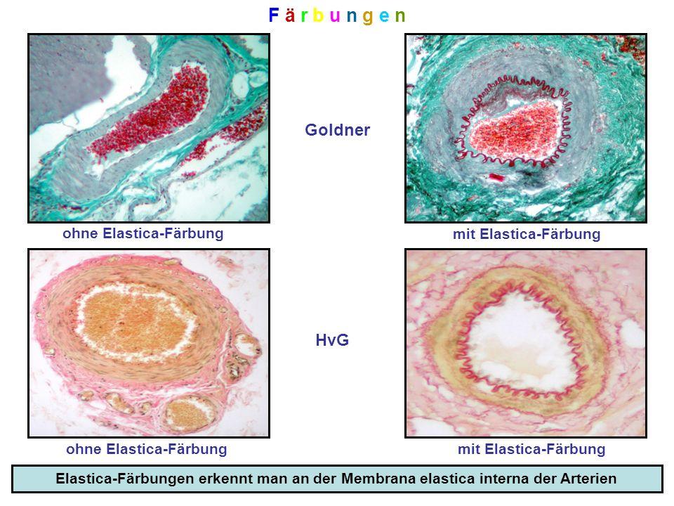 Mikroskopisch-Anatomischer Kurs - ppt herunterladen