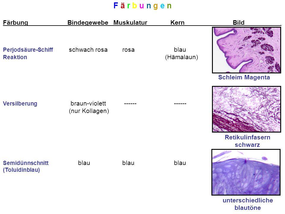 F ä r b u n g e n Färbung Bindegewebe Muskulatur Kern Bild .