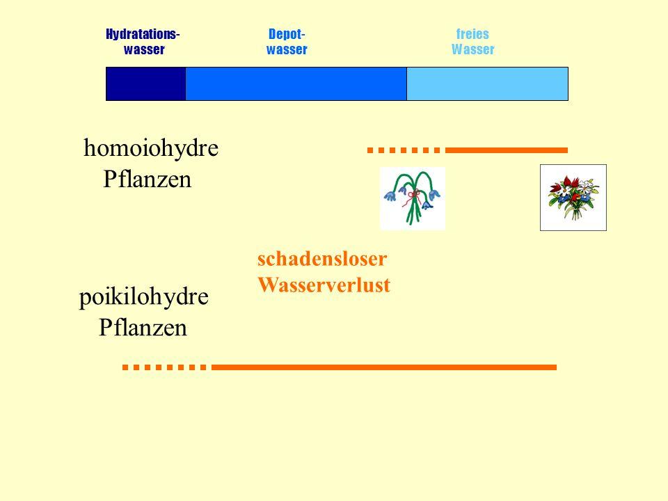 poikilohydre Pflanzen