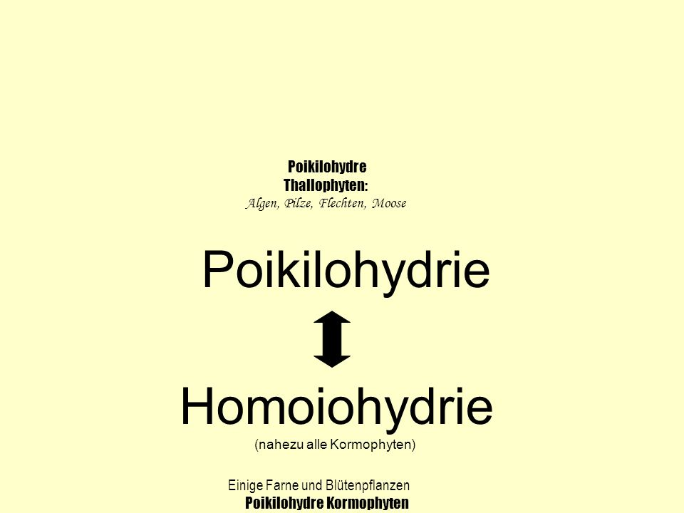 Poikilohydrie Homoiohydrie Poikilohydre Thallophyten: