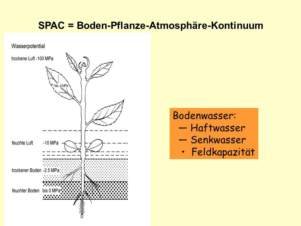 SPAC = Boden-Pflanze-Atmosphäre-Kontinuum