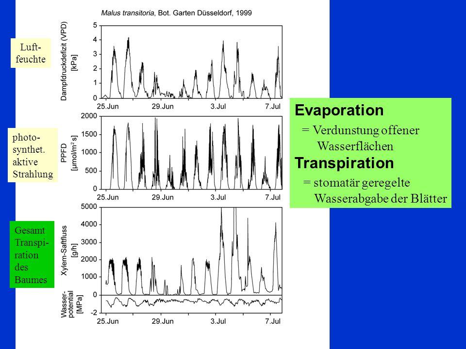 = Verdunstung offener Wasserflächen Transpiration = stomatär geregelte