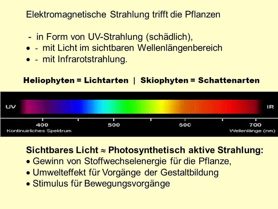 Elektromagnetische Strahlung trifft die Pflanzen