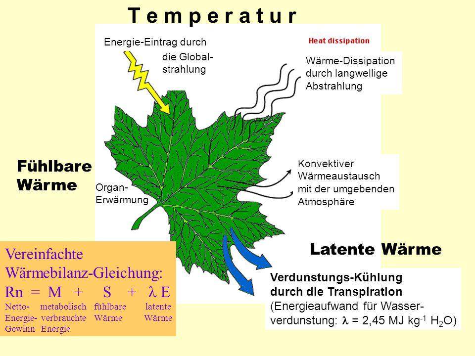 T e m p e r a t u r Fühlbare Wärme Latente Wärme Vereinfachte