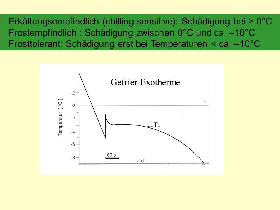 Erkältungsempfindlich (chilling sensitive): Schädigung bei > 0°C