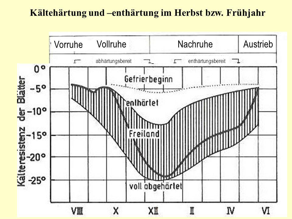 Kältehärtung und –enthärtung im Herbst bzw. Frühjahr