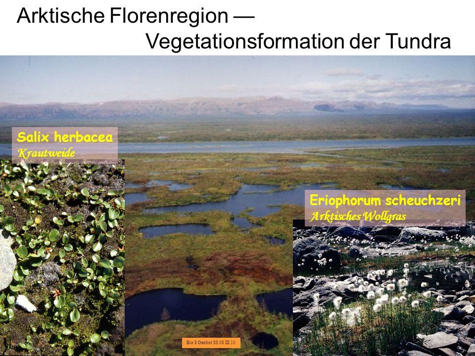 Arktische Florenregion — Vegetationsformation der Tundra